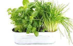 béltisztítás gyógynövényekkel